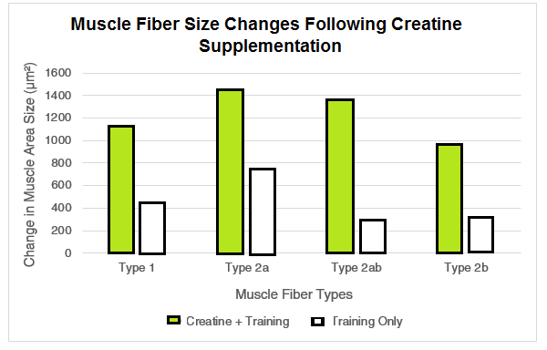 Changes in Muscle Fiber Size with Creatine - Volek et al.